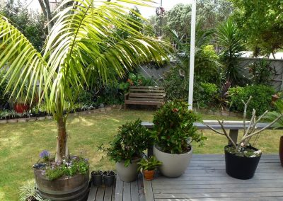 Orewa Motor Lodge Garden2